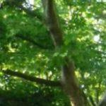 Bäume im Westend
